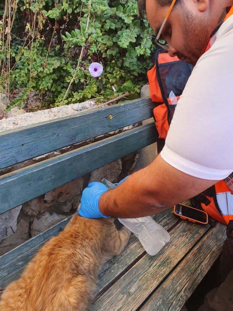 מתנדב איחוד הצלה מעניק טיפול בחתול שנפגע משאיפת עשן בקריית ביאליק (צילום: איחוד הצלה)