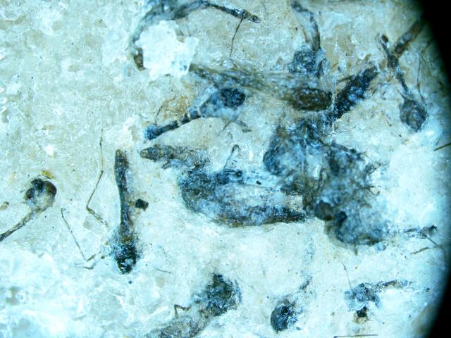 חרקים מתים, צילום הגדלת מיקרוסרופ (צילום: מוטי מנדלסון)