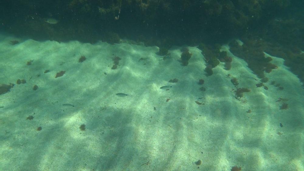 קרקעית הים • הפנינג צלילה בבת גלים (צילום: ירון כרמי)