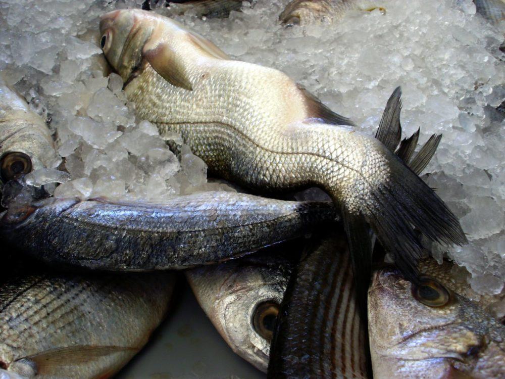 טריות - קשקשי הדג צריכים להיות מבריקים וצמודים לגוף (צילום: צוטי מנדלסון)