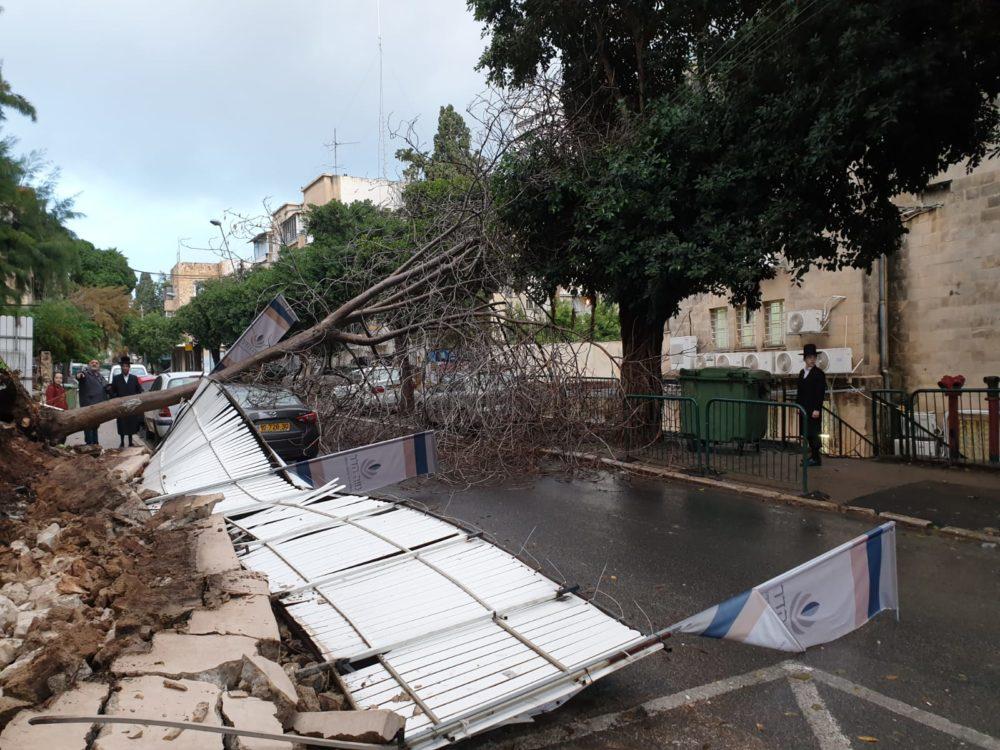 עץ קרס וחומת אבנית קרסה ברחוב הרצוג בחיפה (צילום: איחוד הצלה)