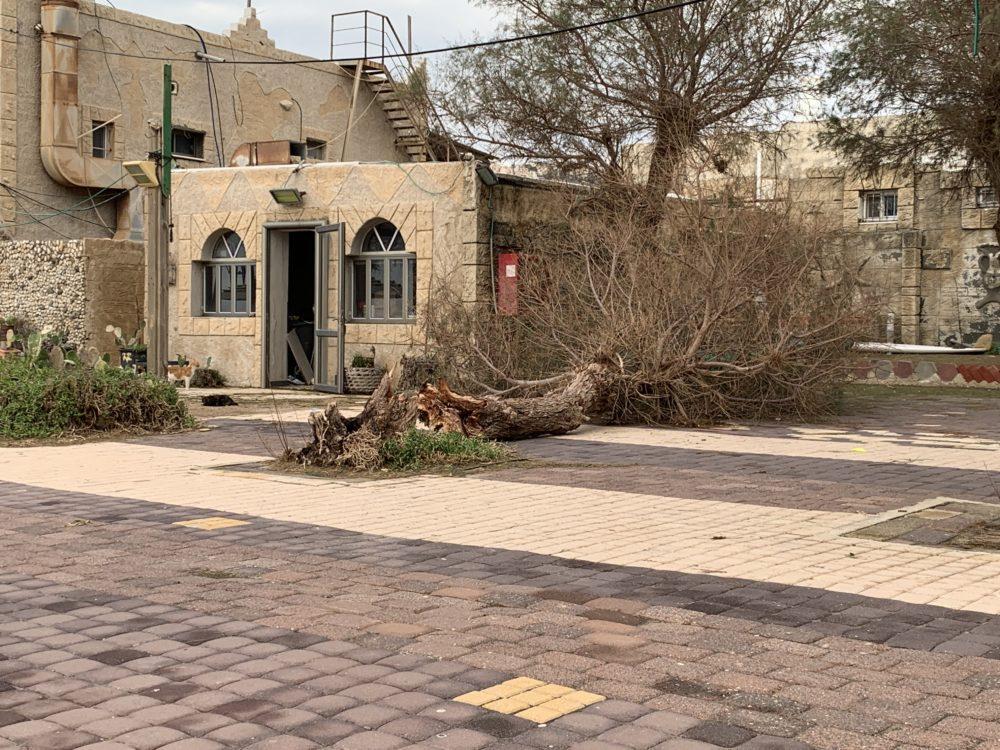 עץ שקרס בסערה - מסעדת הקדרים • הסערה הותירה הרס רב בטיילת חוף דדו בחיפה (צילום: ירון כרמי)