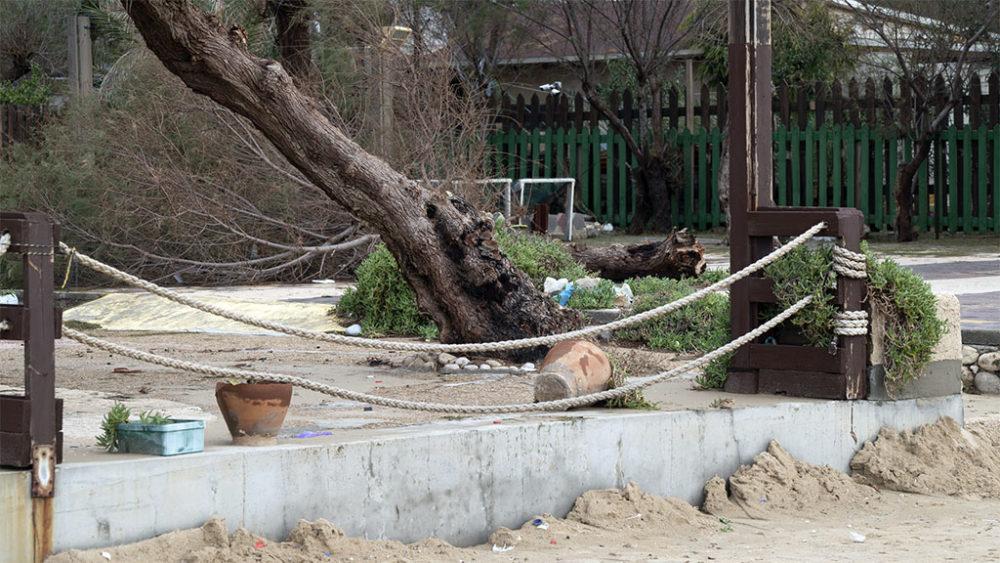 עץ קרס ברחבת הקדרים • הסערה הותירה הרס רב בטיילת חוף דדו בחיפה (צילום: ירון כרמי)