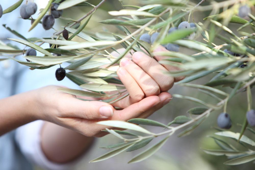 במיוחד לחורף, תרופות סבתא טבעיות משמן זית (צילום: ניר עצמון)