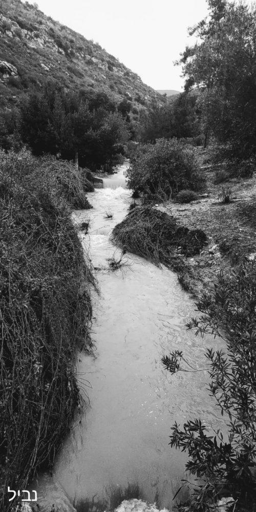 נחל אורן זורם בעוצמה (צילום מימי הסערה: נביל נסראלדין)