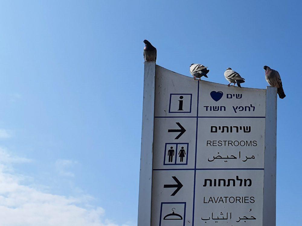 יונים על שלט - יום שבת אביבית נפלאה בלב החורף בחוף דדו בחיפה (צילום: נילי בנו)