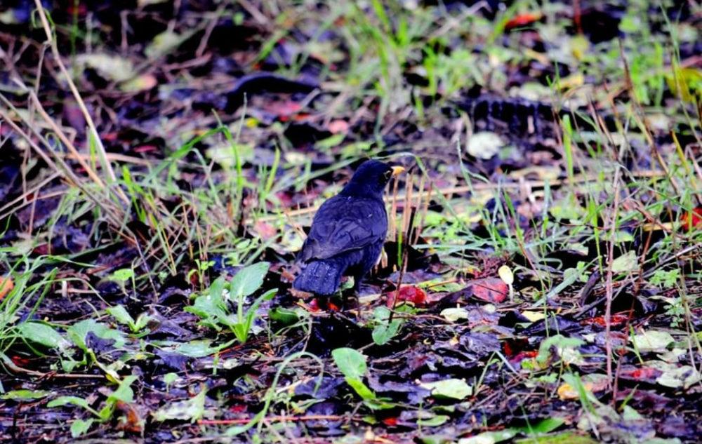 השחרור ליד נחל השופט • ציפורים על הכרמל (צילום: נביל נסראלדין)