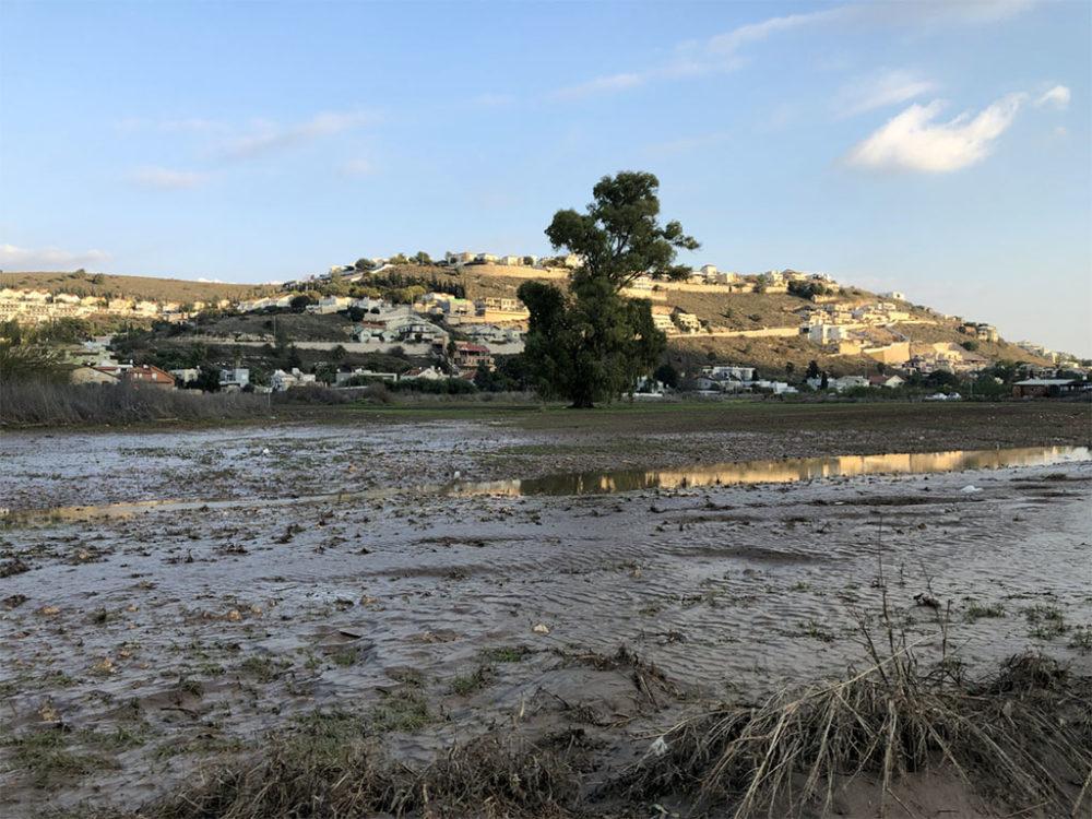 שטח הצפה - נחל הקישון גואה - קריית חרושת (צילום: ירון כרמי)