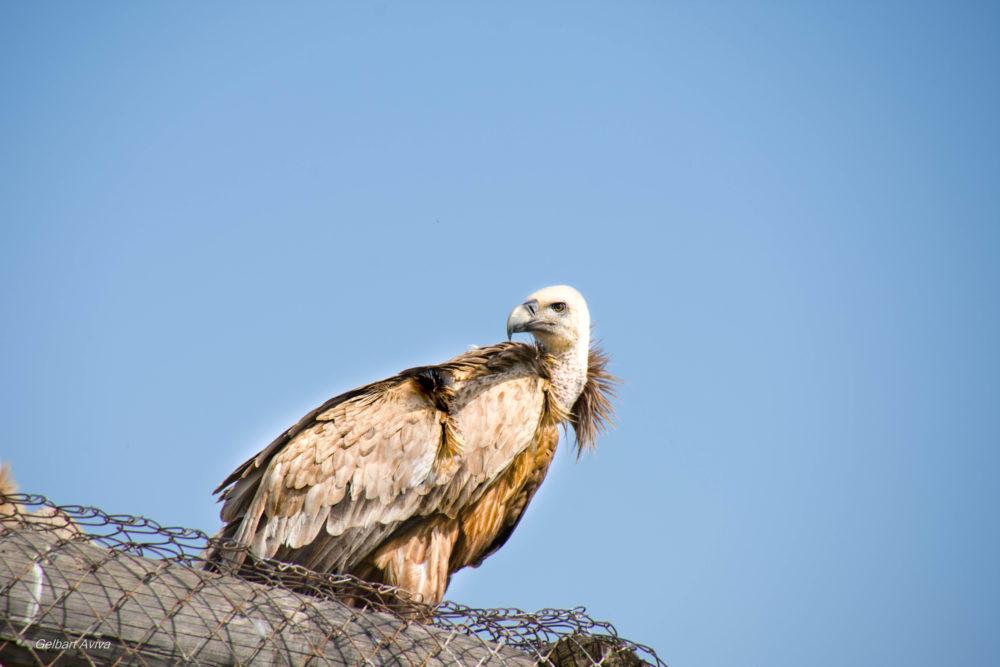 אוצרות הטבע בשמורה החיפאית (צילום: אביבה גלברט)