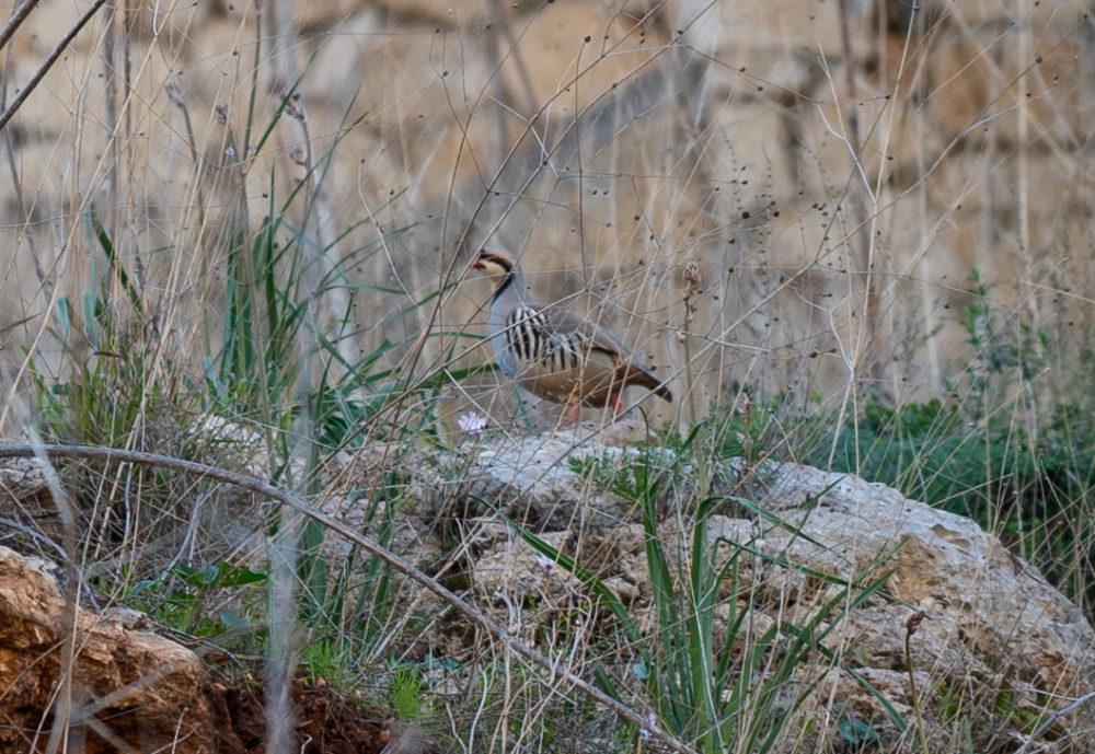 חוגלה • נחל הגיבורים בחיפה (צילום: ירון כרמי)