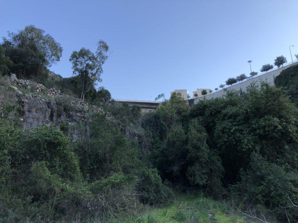 טבע עירוני • נחל הגיבורים בחיפה (צילום: ירון כרמי)