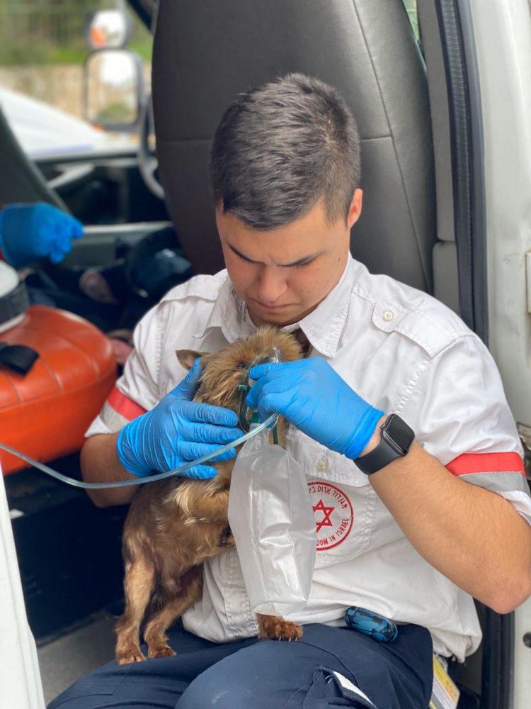 """חמצן לכלב אחרי שריפה (צילום: חי טקאטש, תיעוד מבצעי מד""""א)"""