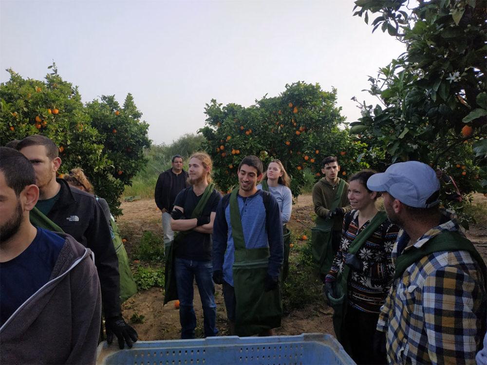 קטיף תפוזים עם השומר החדש בתקופת סגר הקורונה (צילום: ויטלינה מוחין)