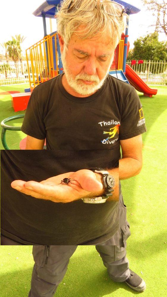 מוטי מנדלסיון מחזיק בחיפושית רצה אוליביה