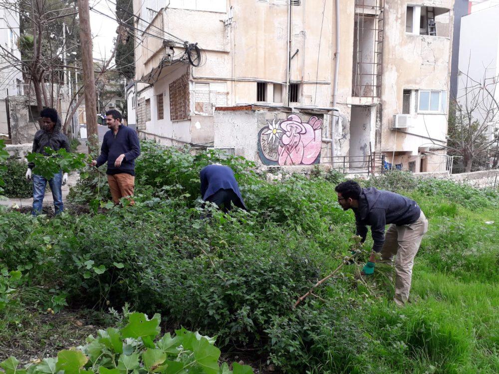 פרויקט הגינה הקהילתית ברחוב סירקין בחיפה (צילום: ניב אוז'לבו (עוז))