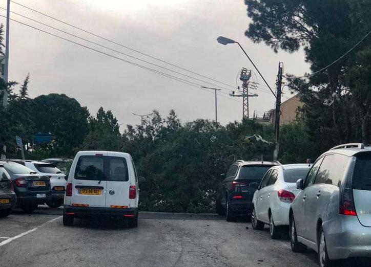 עץ גדול קרס ברחוב אמיל זולא בחיפה (צילום: חי פה)
