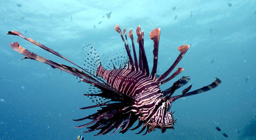 זהרון הדור, אזהרה: לא לגעת בדג (צילום: מוטי מנדלסון)