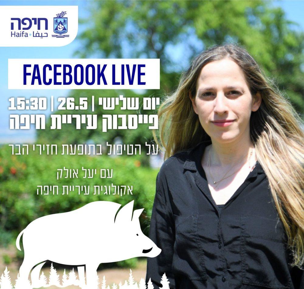 מפגש מקוון נושא חזירי הבר בחיפה (צילום: עיריית חיפה)