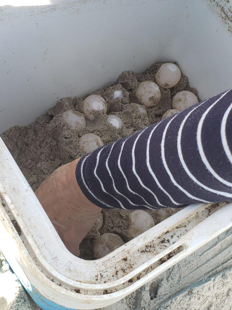 ביצי צבים (צילום: דוברות עיריית חיפה)