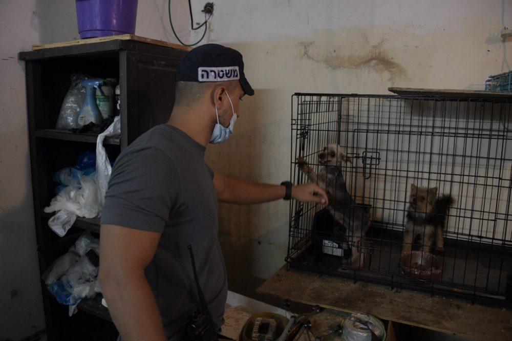 מחלאת כלבים פירטית (צילום: משטרת ישראל)