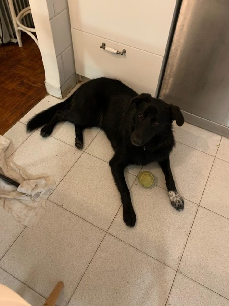 כלב שחור (צילום אלבום פרטי)