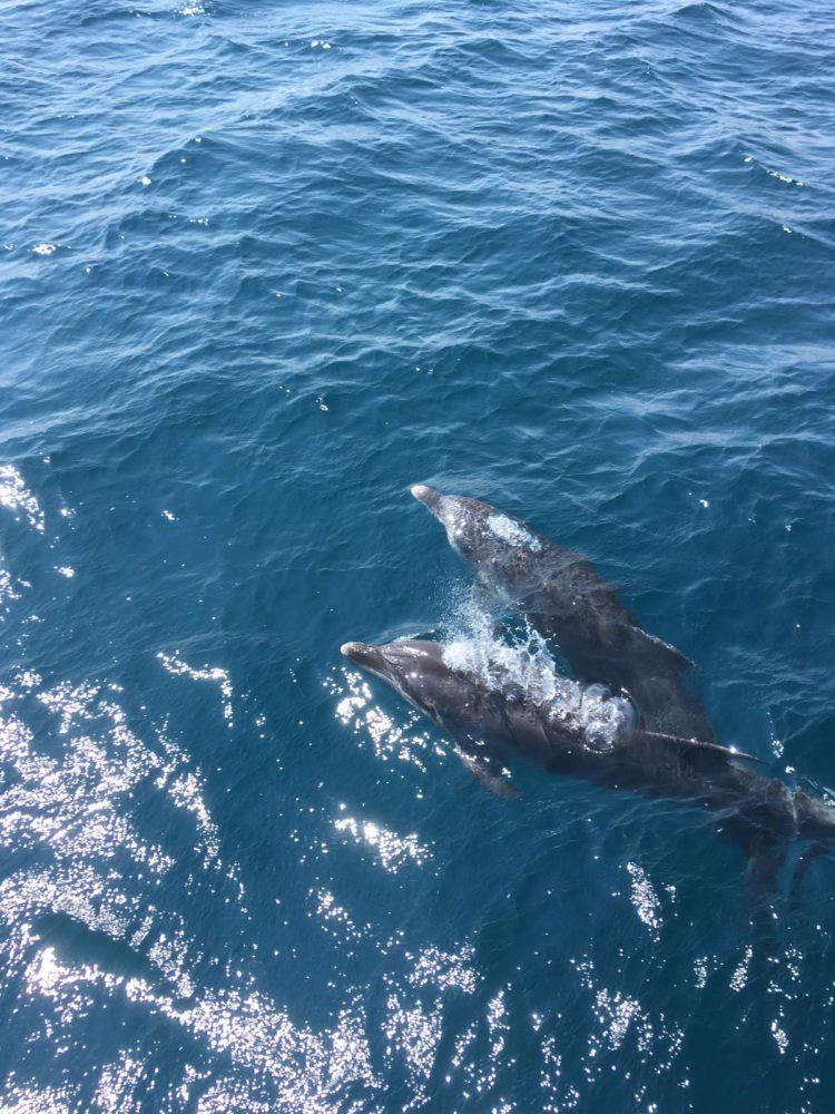 דולפינים בחיפה (צילום: מיכה שייר)