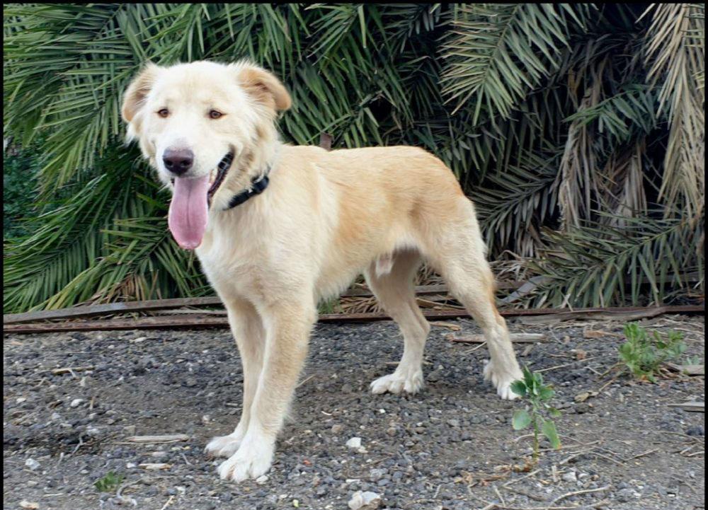 כלב לאימוץ (צילום: צער בעלי חיים - חיפה)