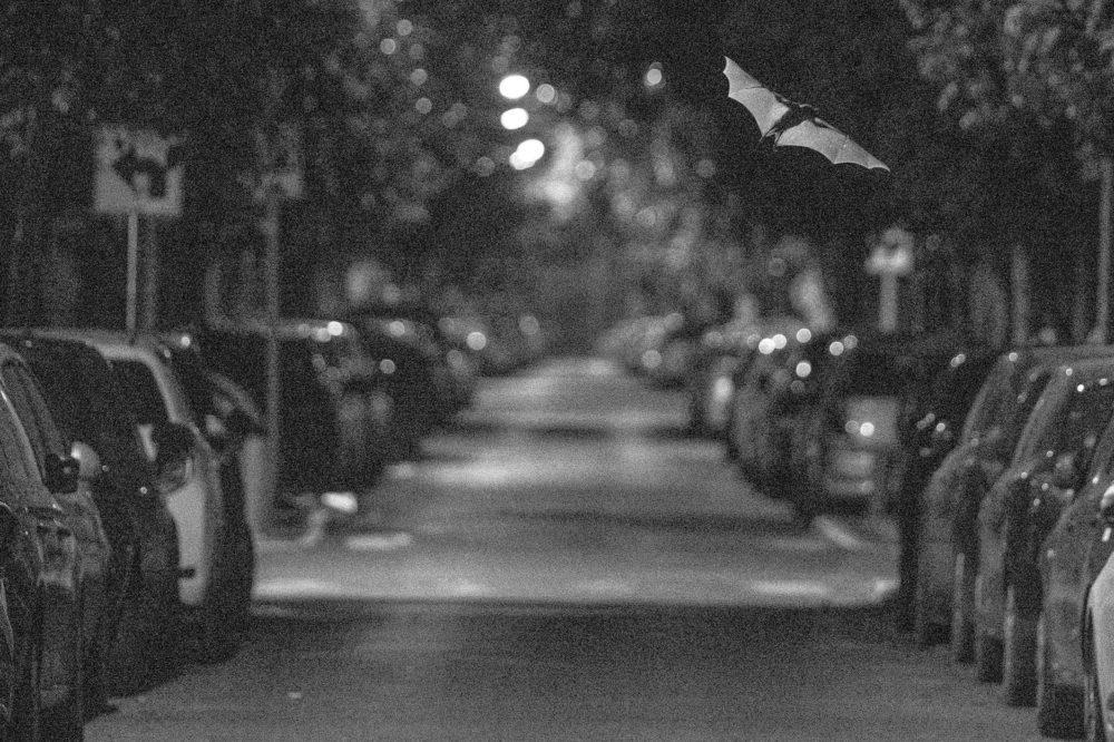 פליטי אור (צילום: יובל חן) מוזאוני חיפה