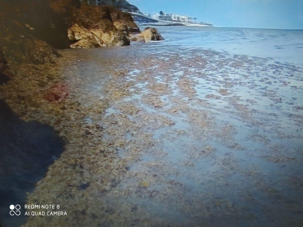 ים של אצות (צילום: מוטי מנדלסון)