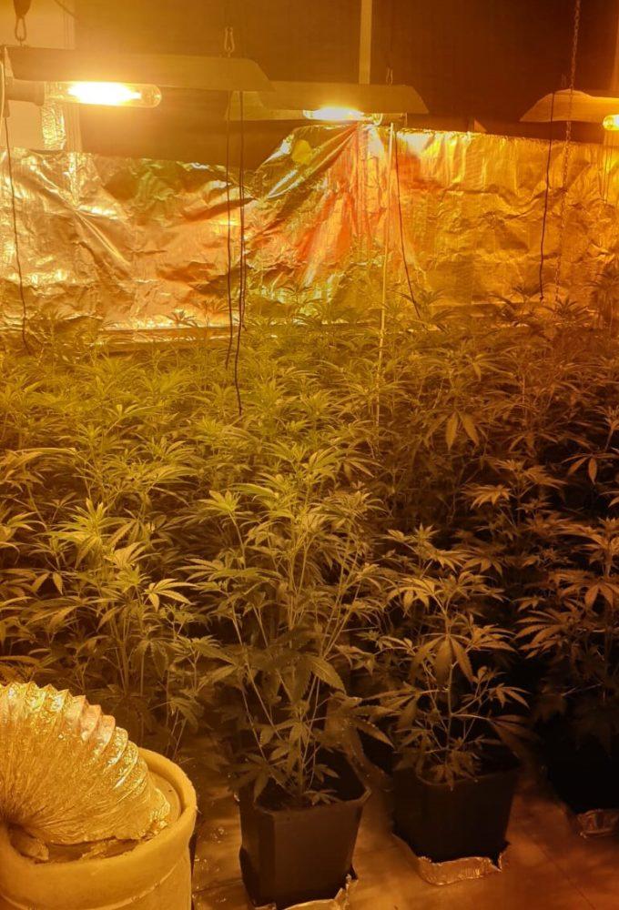 סמים בתפיסת מעבדה (צילום: דוברות המשטרה)