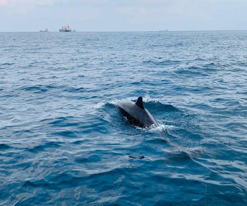 דולפין גדול בחיפה (צילום: השיטור הימי)