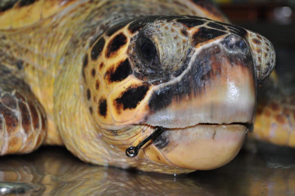הצבים שחזרו לומר שלום (צילום: רשות הטבע והגנים)