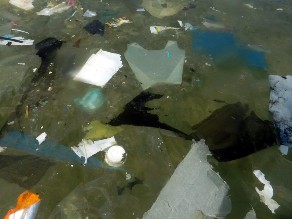 כמויות של פסולת שהגיעה אל הים (צילום: מוטי מנדלסון)