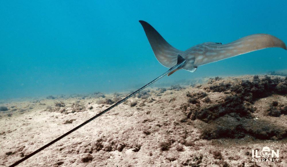"""טחן הפרי - """"עטלף ים"""" (צילום: אילן אלגרבלי)"""