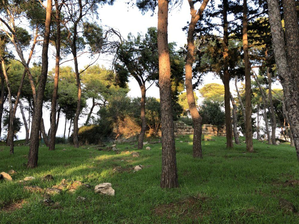 מצודה צלבנית עתיקה בלב חיפה - מצודת ראש מיה (צילום: ירון כרמי)