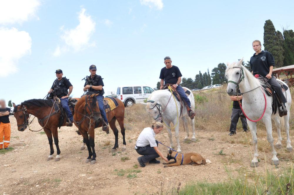 שניות מאסון הכרמל • סוסים בכלא דמון (צילום: שירות בתי הסוהר)