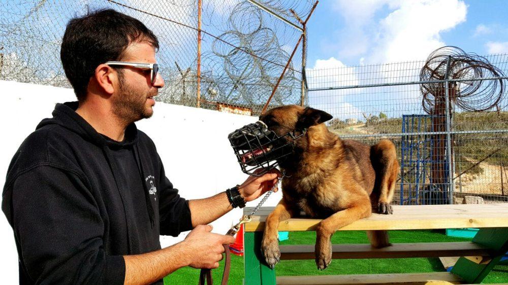 שניות מאסון הכרמל • כלב שמירה בכלא דמון (צילום: שירות בתי הסוהר)