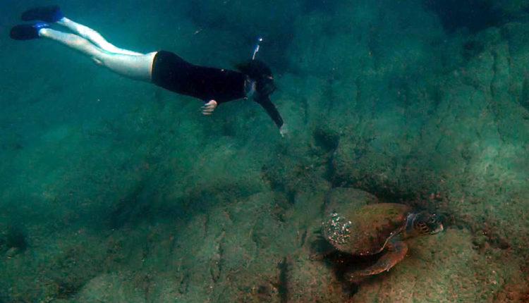 נגה כרמי וצבת הים החומה – צלילה בחופי חיפה בסתיו – שמורת שיקמונה (צילום: ירון כרמי)