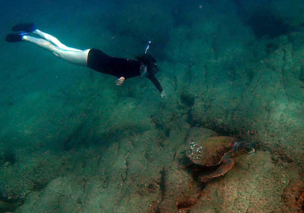 נגה כרמי וצבת הים החומה - צלילה בחופי חיפה בסתיו - שמורת שיקמונה (צילום: ירון כרמי)