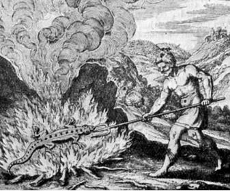 ציור של סלמנדרה בלהבות בספר משנת 1679 צילם: M.M. Pattison Muir (נחלת  הכלל)