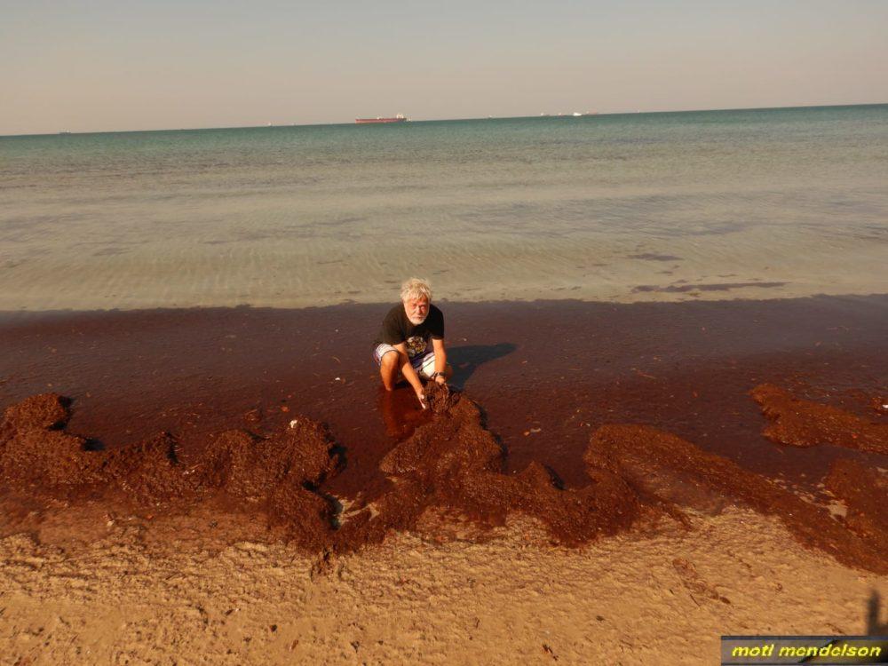 המון אצות אדומות (מוטי מנדלסון)