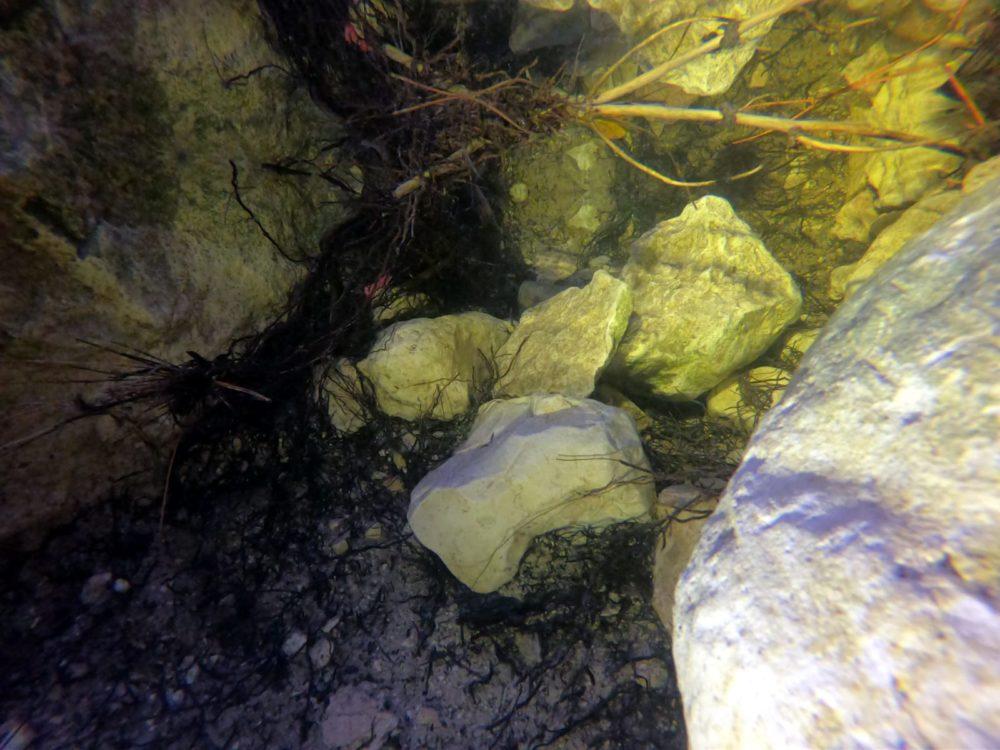 נוף תת-מימי בתוך גב מוצף מי גשם בכרמל (צילום: מוטי מנדלסון)
