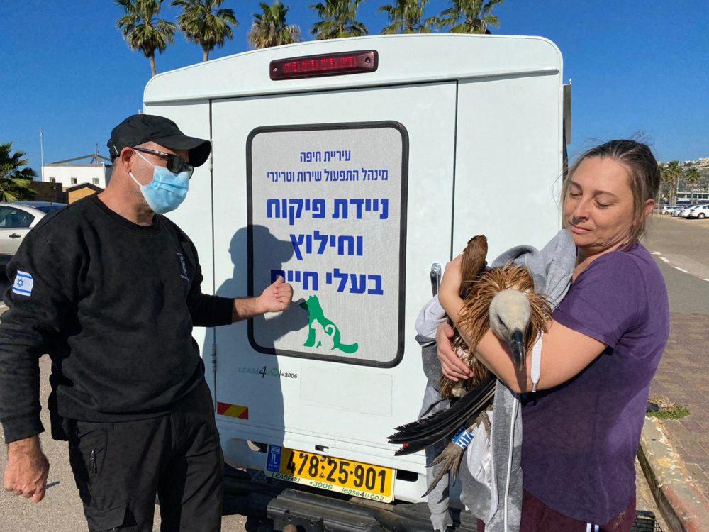 הנשר שניצל (צילום: ראובן כהן, דוברות עיריית חיפה)
