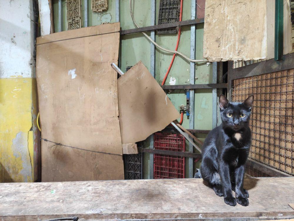 חתול • שוק תלפיות בחיפה (צילום: גלעד שטיין)