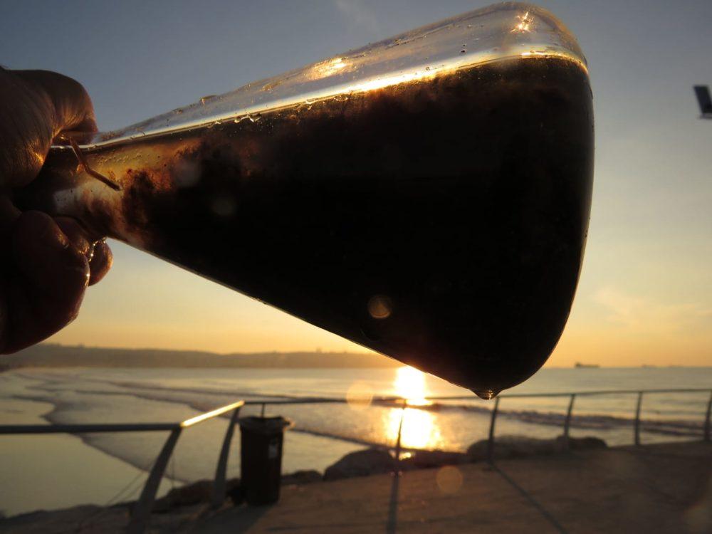 אצה אדומה שנמצאה על קרקעית הים בחופי הקריות (צילום: מוטי מנדלסון)
