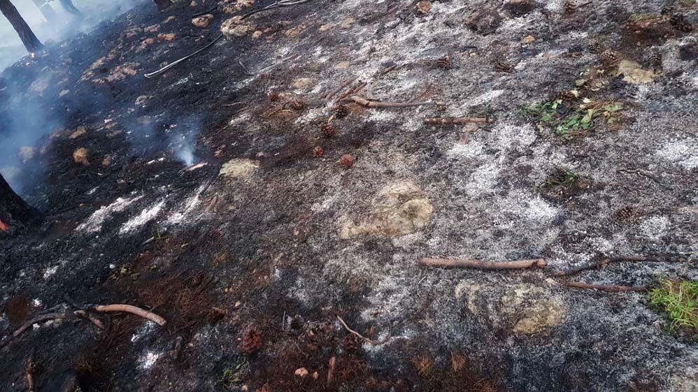 שרפה ביער קריית אתא (צילום: כבאות והצלה - מחוז חוף)