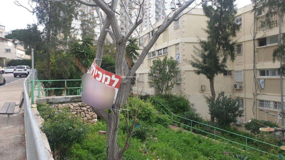 שלטים על עצים בחיפה | פרויקט מיוחד לכבוד טו בשבט (צילום: חי פה)