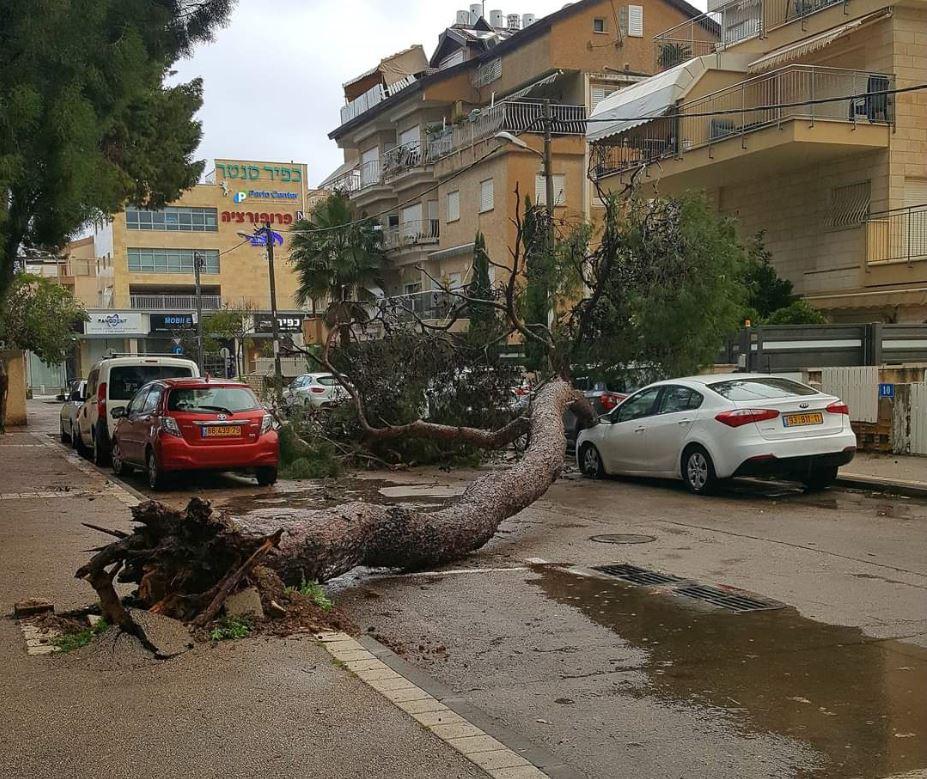 קריסת עץ בקריית חיים רחוב אלישבע קפלן (צילום: רוט קפון