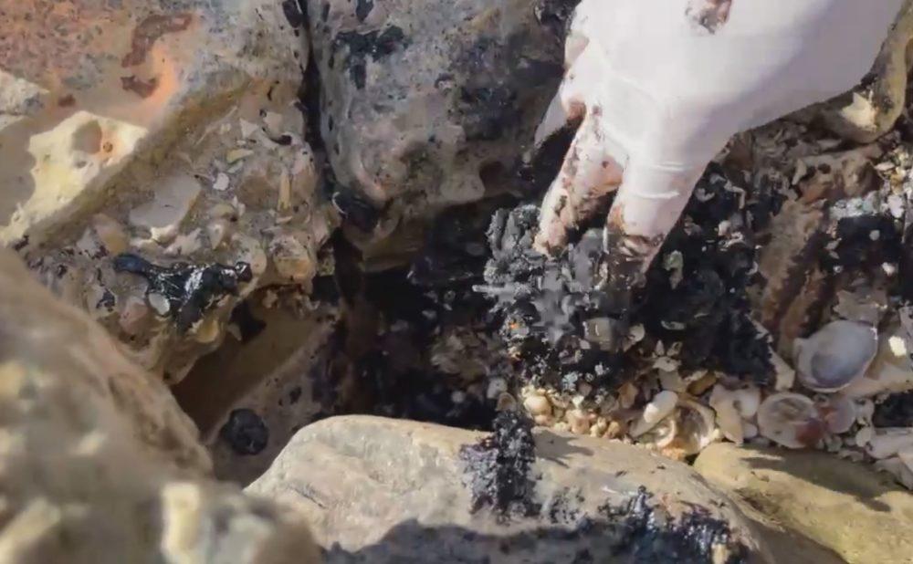 ניקוי זפת שנתקע בין הסלעים (צילום: ירון כרמי)