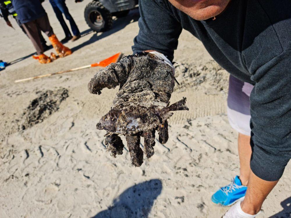 אסון הזפת - דג מת (צילום: שלומית שפיצר)